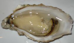 oysters-hairloss.jpg