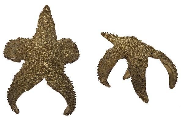 Alkemie Starfish Cuff