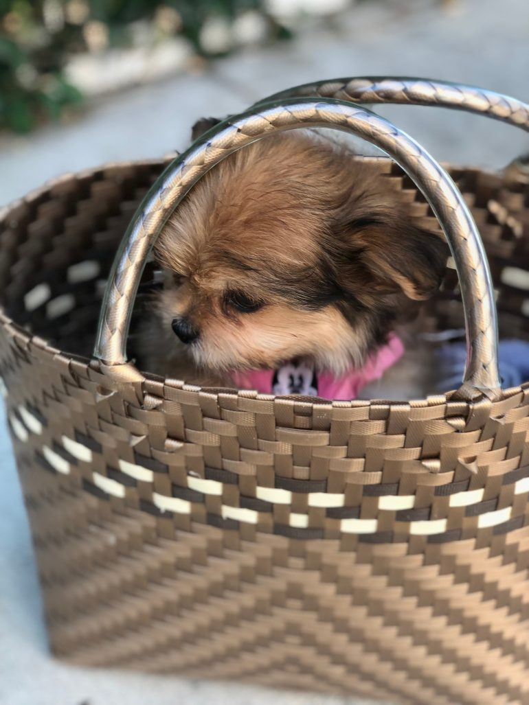 Puppy in basket